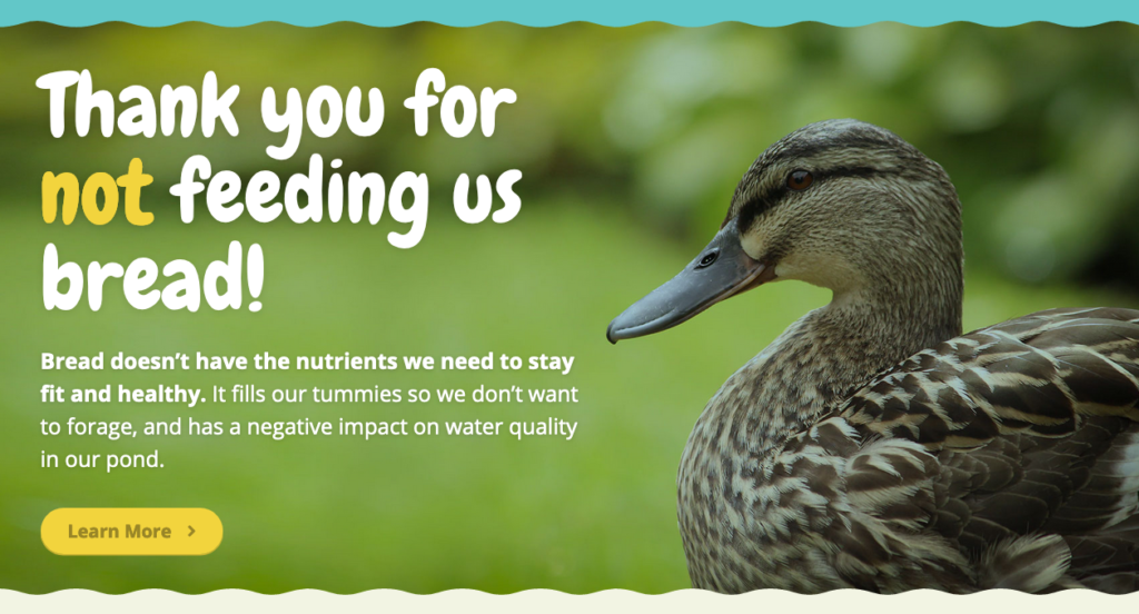 This image is from a website: www.breaducation.org.uk/index.html , it shows ducks saying thanks for not feeding them bread. We all need to choose #betterthanbread .